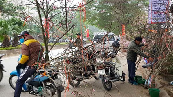 Thủ tướng Chính phủ nghiêm cấm chặt đào rừng chơi Tết