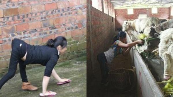 Cô gái đi bằng 4 chi 37 tuổi thành công nhờ về quê nuôi bò, thu nhập hàng trăm tỷ