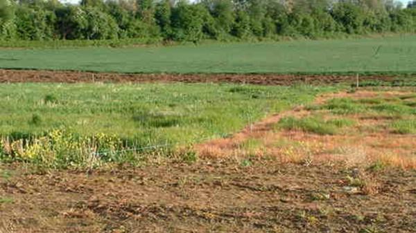 Thủ tướng đồng ý chuyển mục đích sử dụng đất tại tỉnh Thanh Hóa