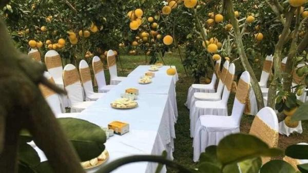 """Sự thật đám cưới trong vườn bưởi sai trĩu quả đang """"gây sốt"""" mạng"""